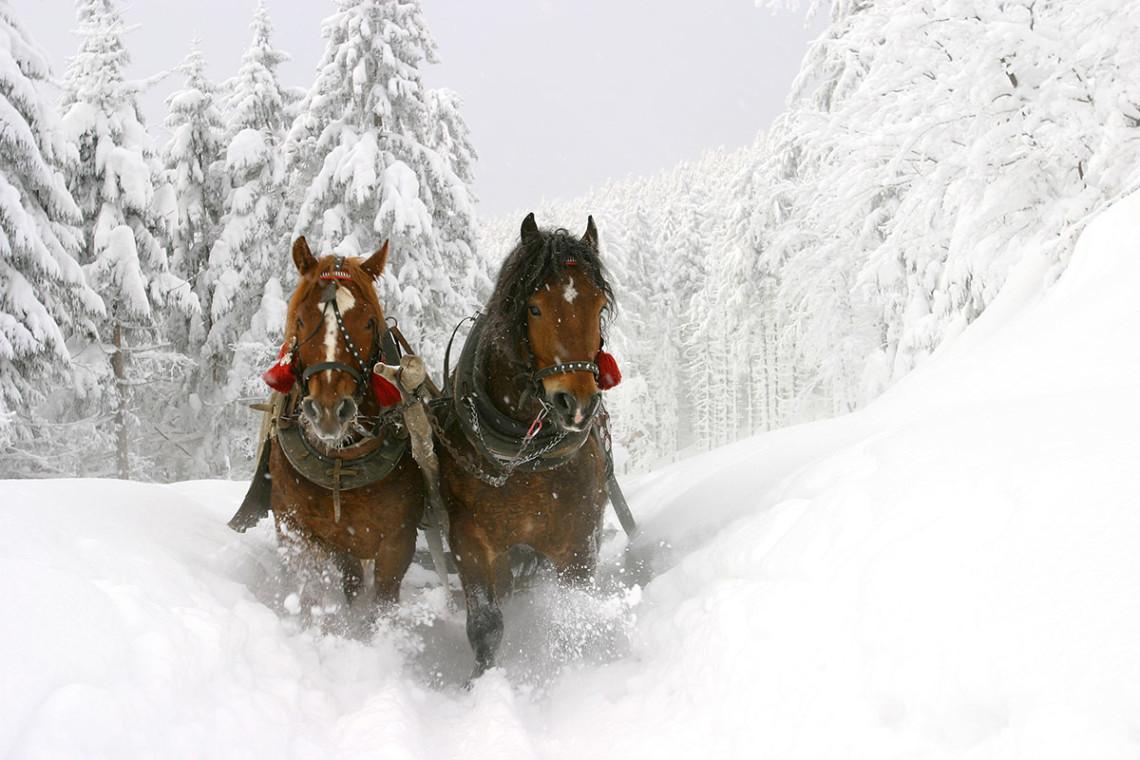 Pferdeschlittenfahren - Winterurlaub & Skiurlaub in Flachau, Salzburger Land, Ski amadé - Ferienwohnung im Haus Maier