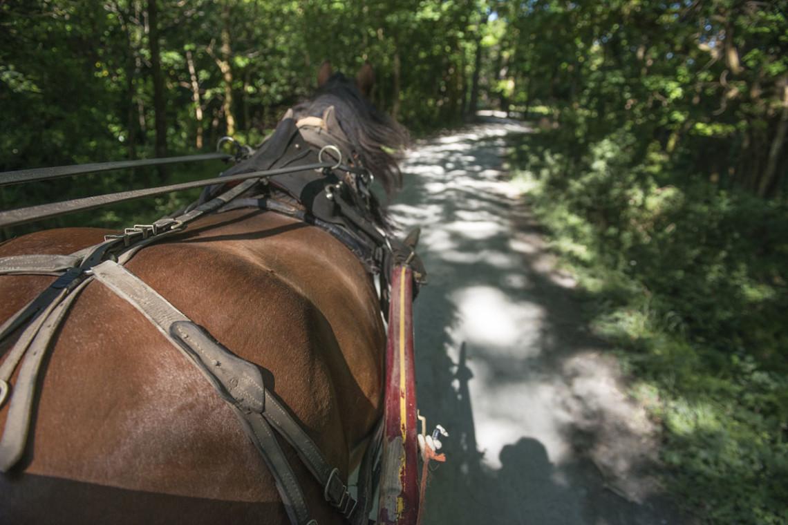Sommer in der Region, Sommerurlaub in Flachau, Ferienwohnung im Haus Maier, Salzburger Land - Pferdekutschenfahren in Flachau